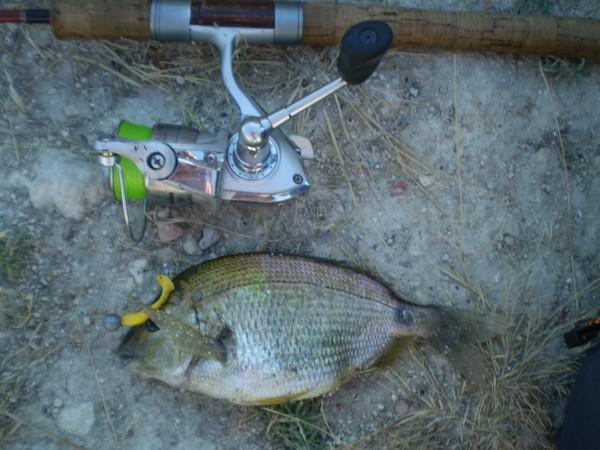 ловля на спиннинг огромных рыб