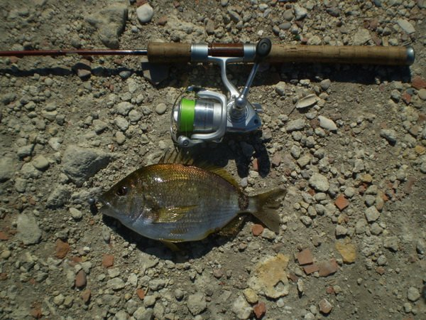 рыбалка на белом море на спиннинг
